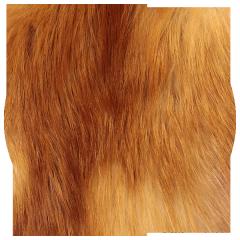 Купить мех рыжей лисы